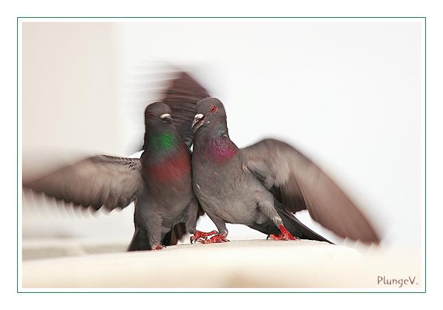 "фото ""Fight..."" метки: природа, дикие животные"