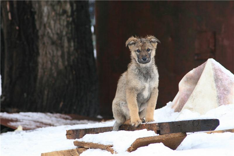 """фото """"Погорелец"""" метки: природа, жанр, домашние животные"""