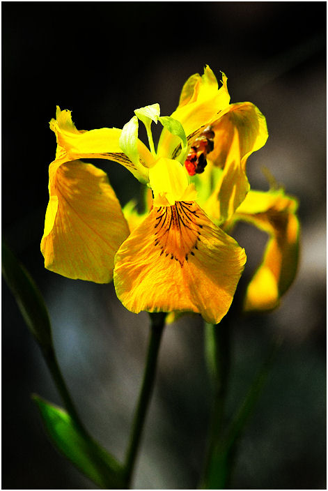 """фото """"1"""" метки: природа, цветы"""