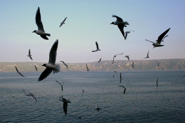 "photo ""The Seagulls Show"" tags: nature, landscape, water"