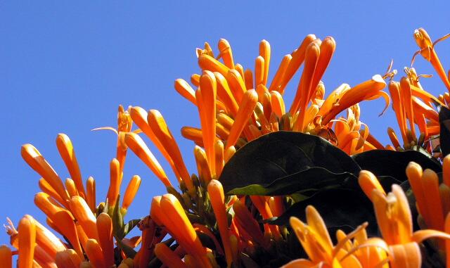 "фото ""Glad"" метки: природа, цветы"