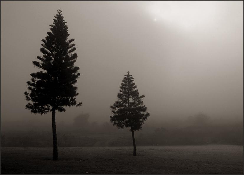 """фото """"Пробуждение..."""" метки: природа, черно-белые,"""