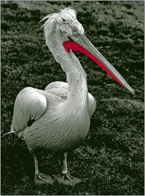 """фото """"Серьезный красавец"""" метки: природа, портрет, дикие животные"""