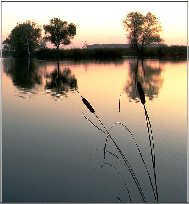 """фото """"Тишь"""" метки: природа, цветы"""