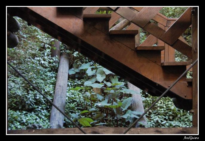 "photo ""Stairway"" tags: landscape, travel, South America, forest"