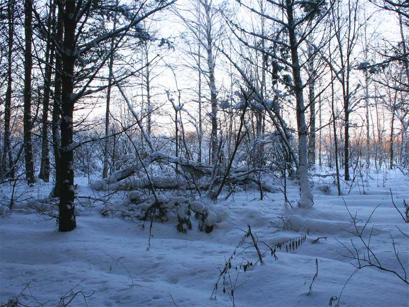 """фото """"Взгляд из леса"""" метки: ,"""