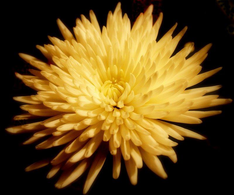 """фото """"Mum's Mum!"""" метки: природа, цветы"""
