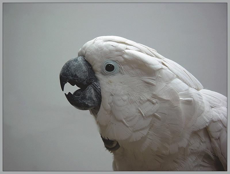 """photo """"Po-rrr-t-rrr-et"""" tags: nature, pets/farm animals, wild animals"""