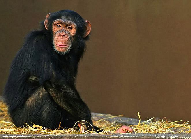 "фото ""Mangulo"" метки: природа, дикие животные"