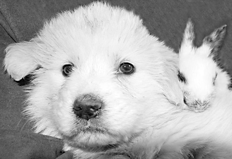 """фото """"Про друзей"""" метки: природа, дикие животные"""