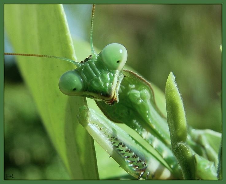 "photo ""Jokonda's smile"" tags: macro and close-up, nature,"