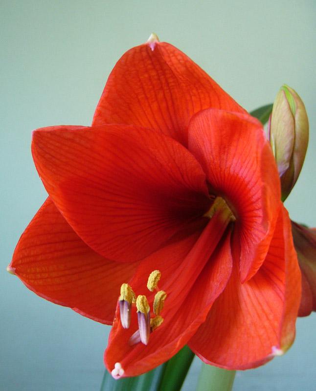 """фото """"Пестики-тычинки"""" метки: природа, цветы"""