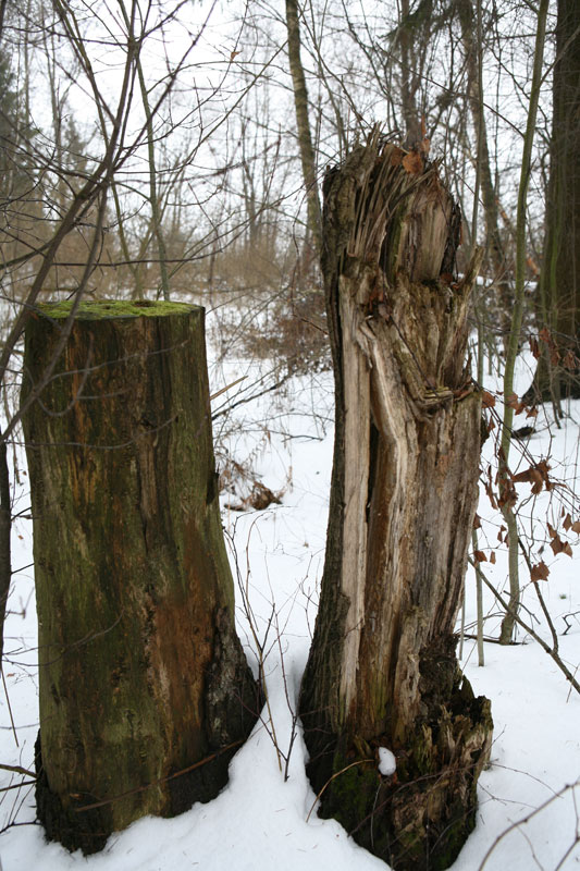"photo ""***"" tags: nature,"