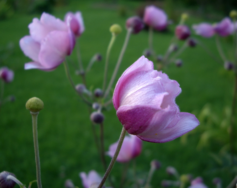 """фото """"Для тех, кто любит цветы натуральные!"""" метки: пейзаж, лето"""
