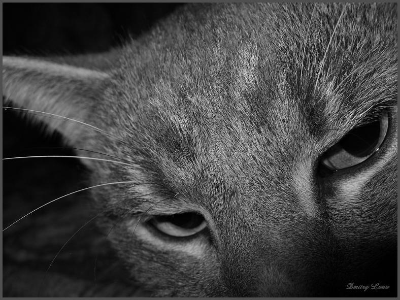 "фото ""Cat eye"" метки: черно-белые,"