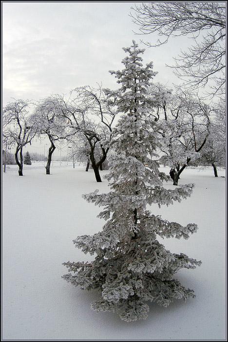 """фото """"Ёлочка зимой"""" метки: пейзаж, природа, зима"""