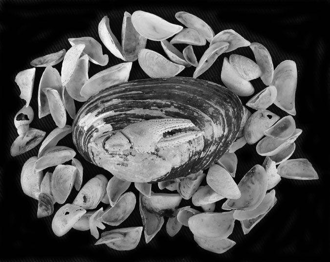 """фото """"afterlife arrangement"""" метки: природа,"""