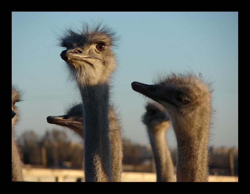 """фото """"Мечтатель"""" метки: природа, дикие животные"""
