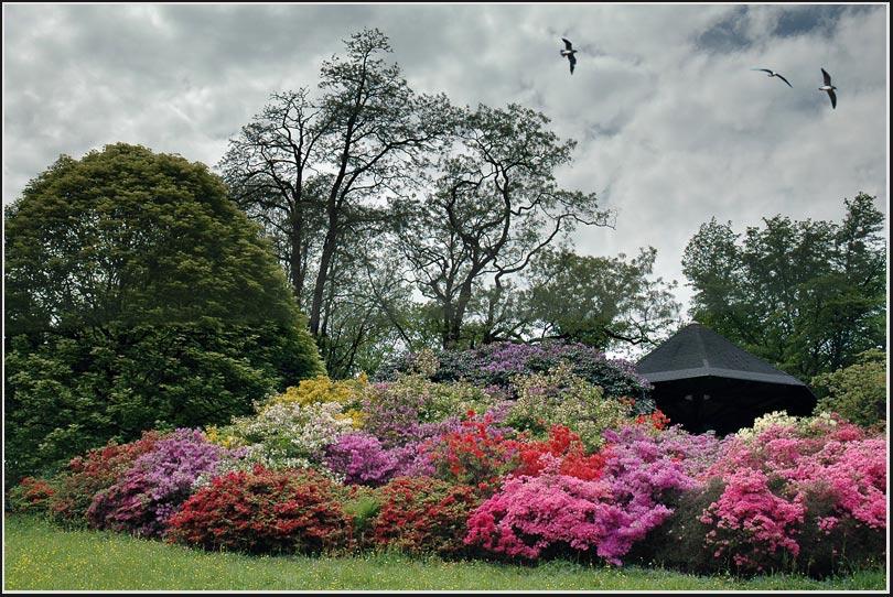 """фото """"Пролетая над..."""" метки: пейзаж, природа, цветы"""