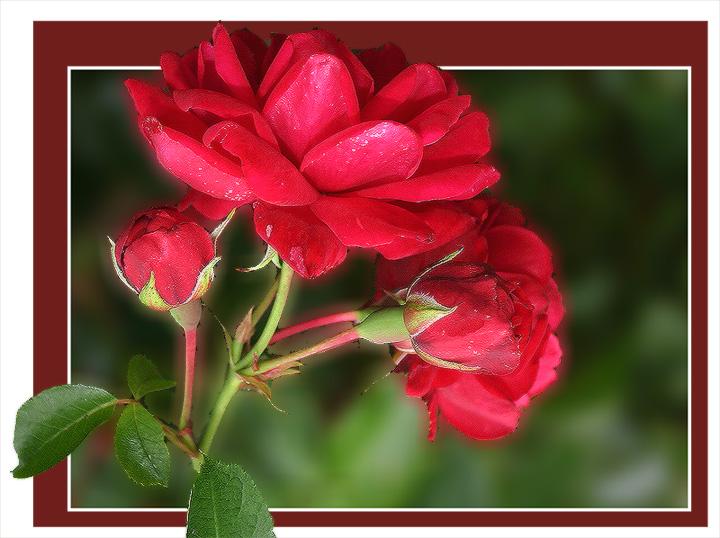 """фото """"С Праздником, дорогие девушки!!!"""" метки: природа, цветы"""