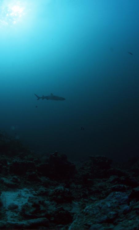 "photo ""shark"" tags: underwater,"