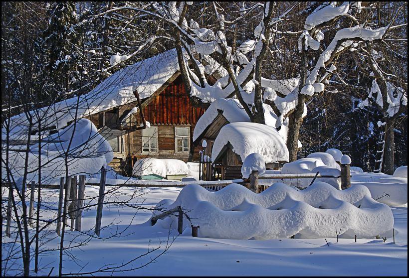 "фото ""В дремучем лесу"" метки: пейзаж, зима, лес"