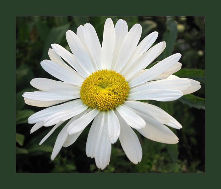 """фото """"Для милых дам"""" метки: природа, цветы"""