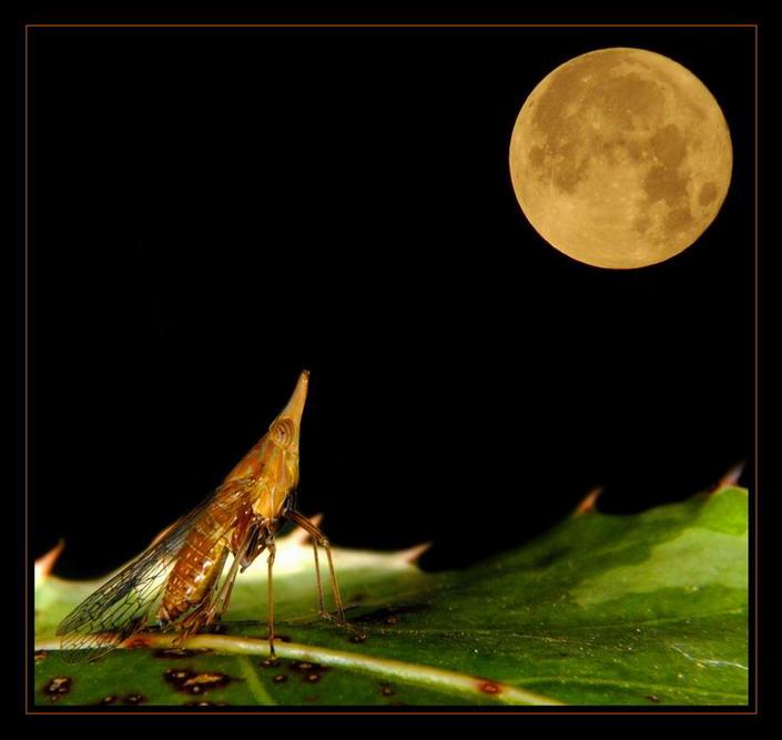 """фото """"Тоска"""" метки: макро и крупный план, природа, насекомое"""