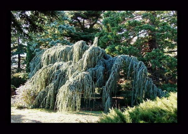 "фото ""Загадочное дерево"" метки: природа,"