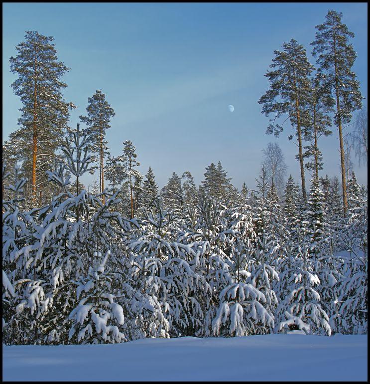 """фото """"Лес, солнце и луна"""" метки: пейзаж, зима, лес"""