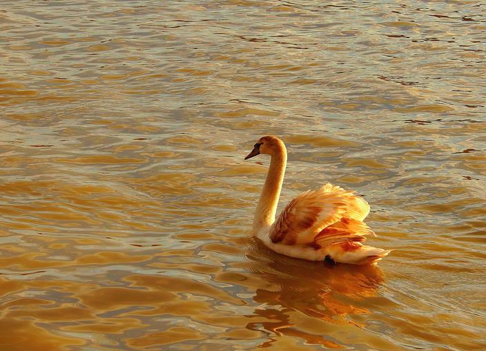 """фото """"Золотая птица"""" метки: природа, дикие животные"""