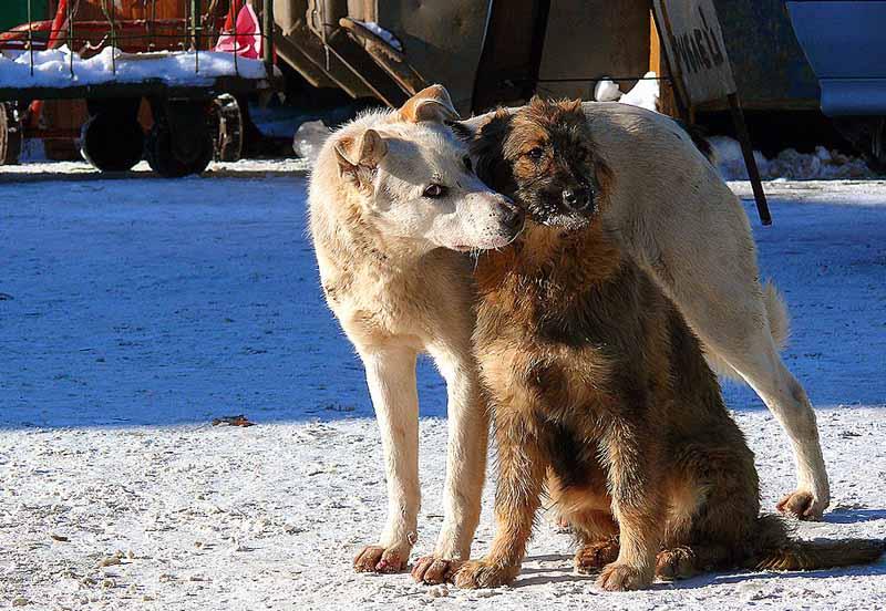 """фото """"Нежность"""" метки: природа, дикие животные, домашние животные"""