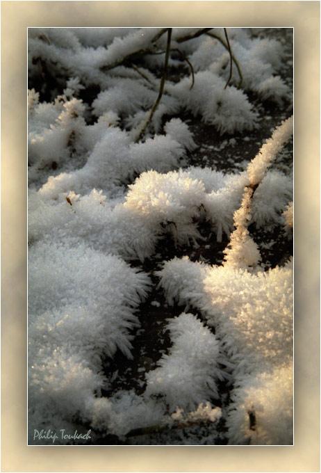 """фото """"Снег на болоте"""" метки: природа,"""