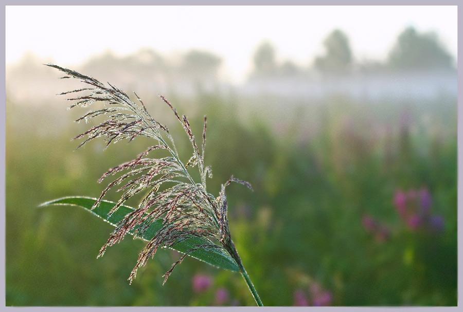 """фото """"Утро"""" метки: пейзаж,"""