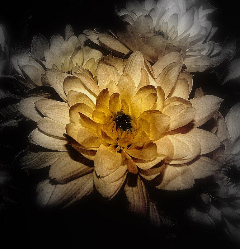 "фото ""Only flowers!"" метки: природа, цветы"