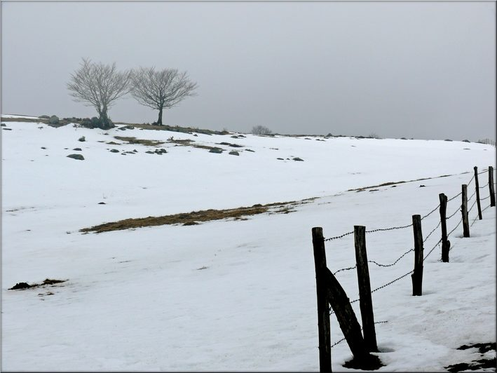 "photo ""Now, winter is only here"" tags: landscape, nature, flowers, winter"