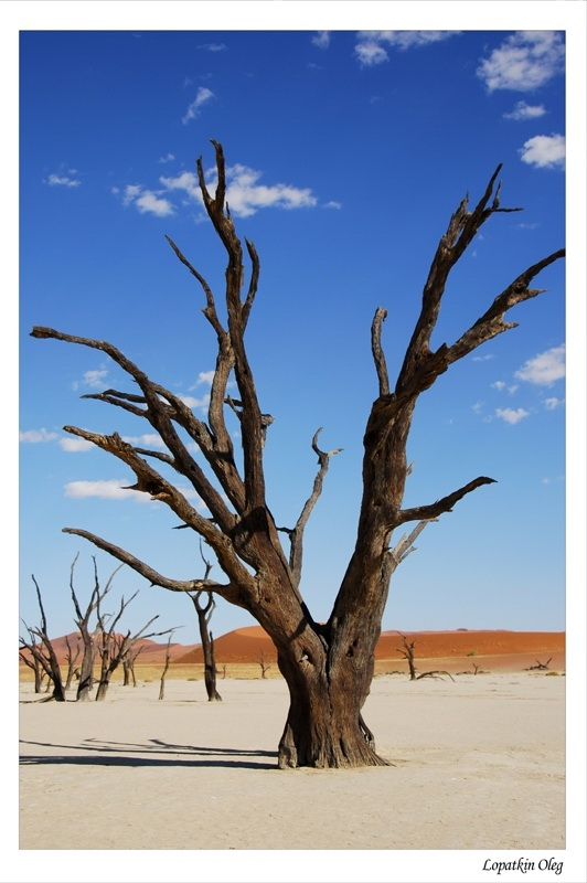 "photo ""Dead vlei"" tags: travel, Africa"