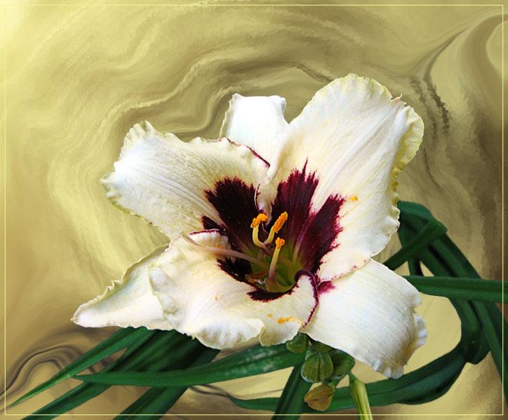 "фото ""Day-Lily"" метки: природа, фотомонтаж, цветы"
