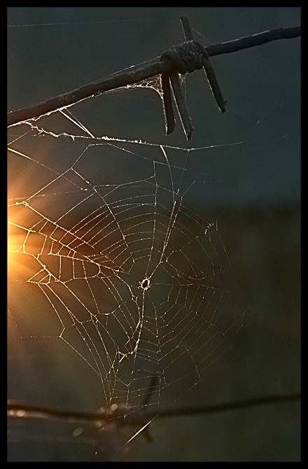 "фото ""~~~"" метки: природа, насекомое"
