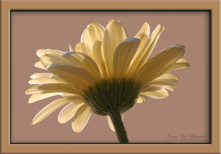 """фото """"Seeking the sun !"""" метки: природа, путешествия, Северная Америка, цветы"""