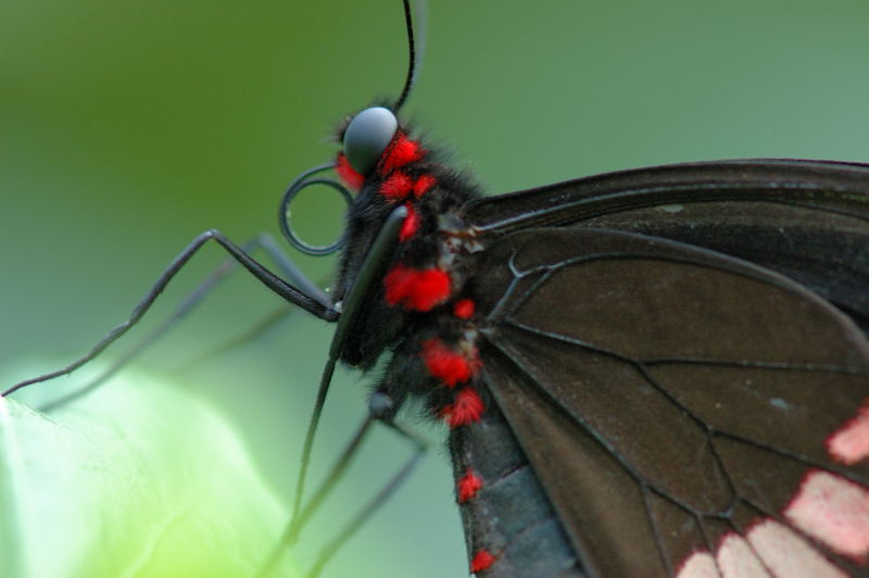 "photo ""Black and red"" tags: nature, insect"