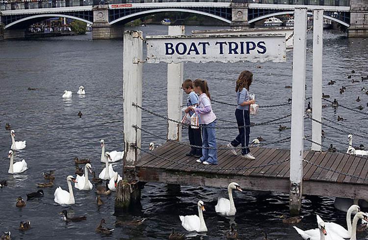 "фото ""While the boats are away, the swans will play"" метки: репортаж, жанр,"