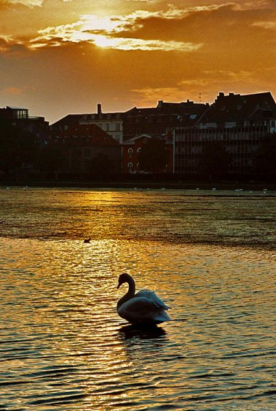 "photo ""Golden Eventide"" tags: travel, nature, Europe, wild animals"