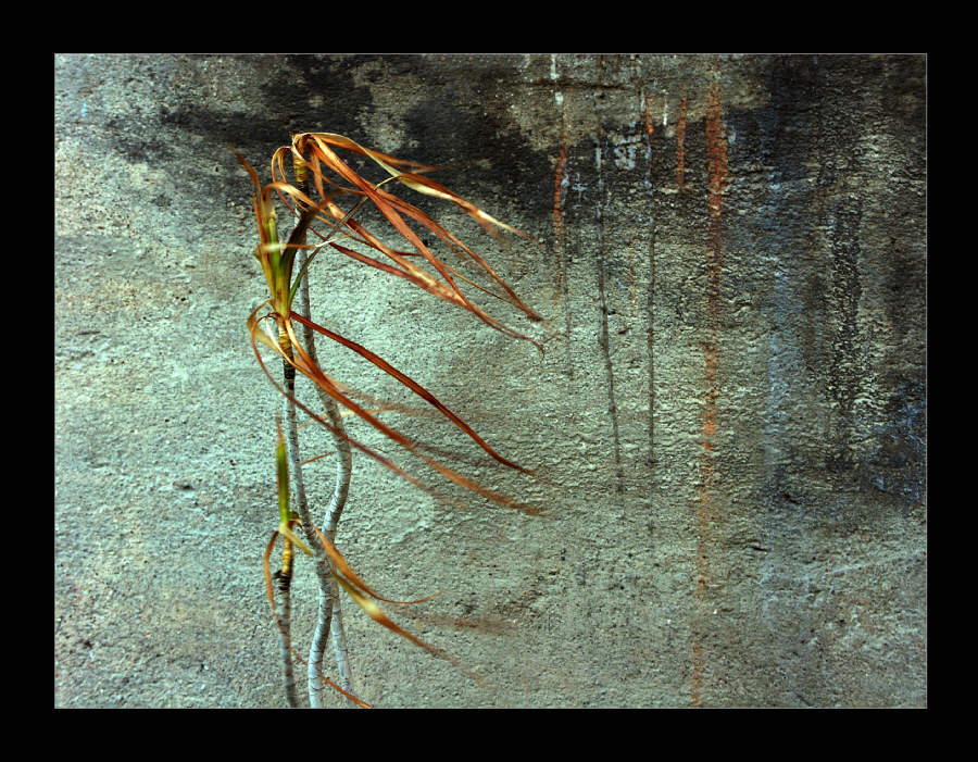 "photo ""Improvisation (On the Road)"" tags: abstract,"