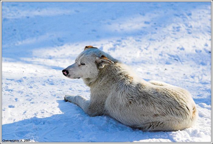 """фото """"Жизнь уличной собаки."""" метки: природа, жанр, дикие животные"""