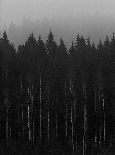 "photo ""'Gloomy'"" tags: landscape, forest, spring"