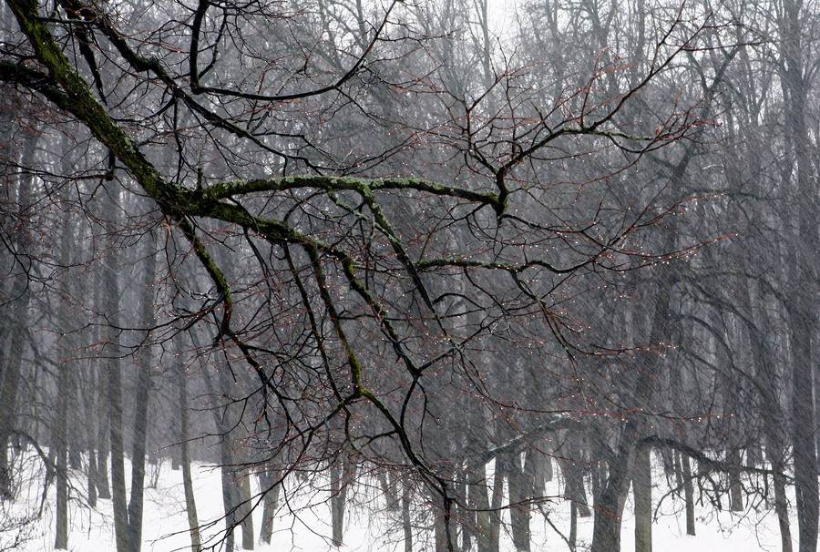 "photo ""Thaw"" tags: landscape, nature, winter"
