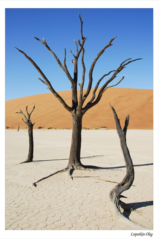 "photo ""Dead vlei 2"" tags: travel, Africa"