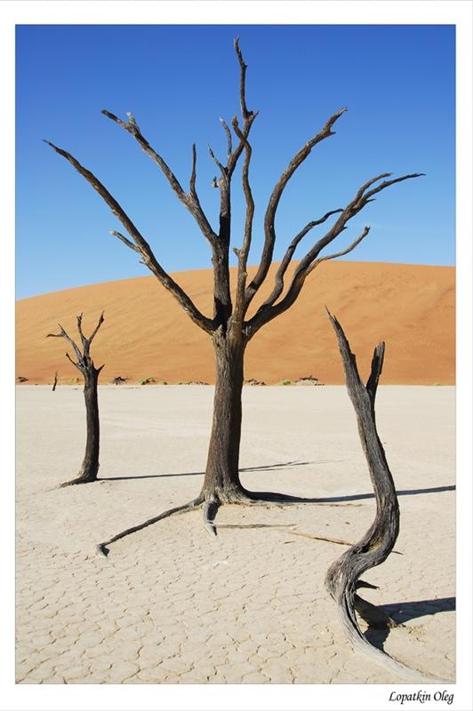 "фото ""Dead vlei 2"" метки: путешествия, Африка"