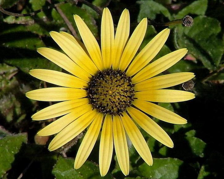 "фото ""Yellow"" метки: природа, цветы"